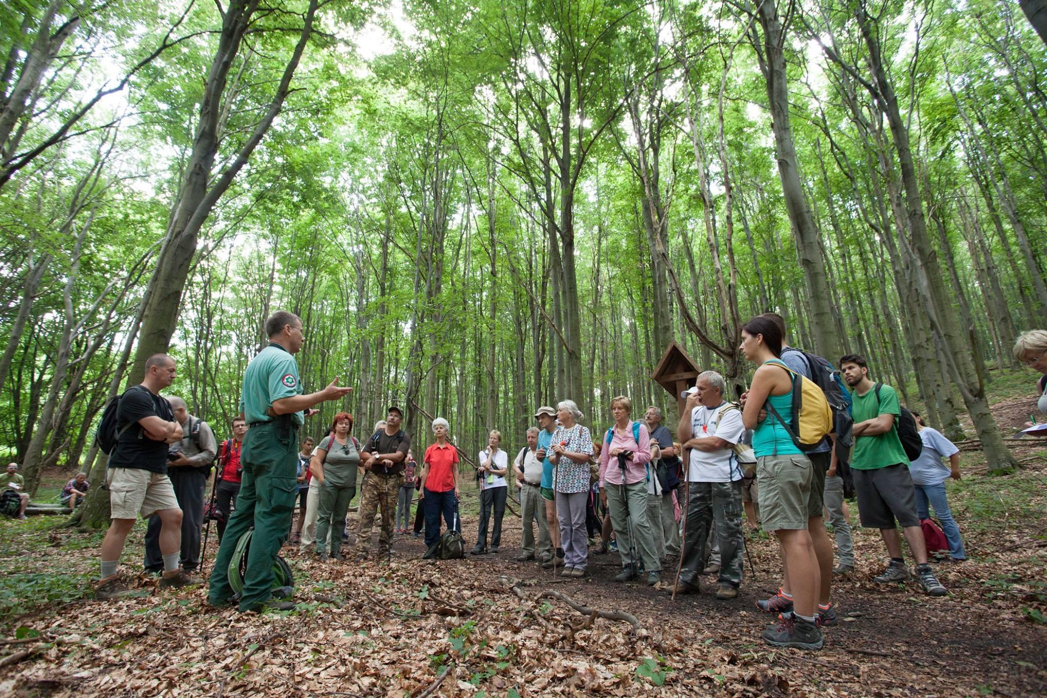 nemzeti park bükki erdő túra