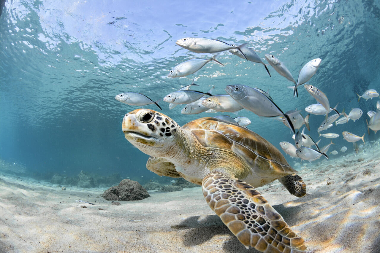 tenger-termeszet-kornyezetvedelem-hal-teknos