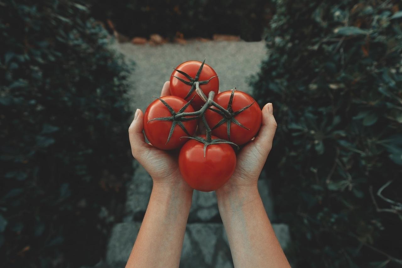 paradicsom_egészség_Zöldség