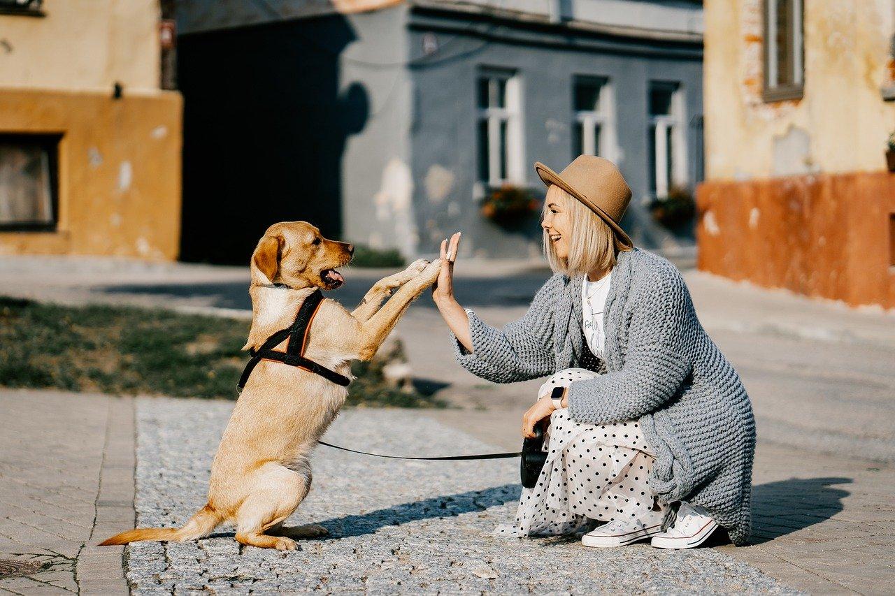 kutya gazda állat